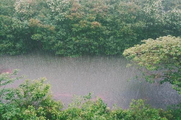 La lluvia ácida y sus efectos