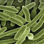 Bacterias agua e coli