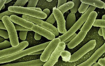 Bacterias en el agua de consumo humano y sus efectos