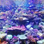 agua osmosis acuario