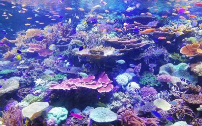 Beneficios del agua osmotizada para acuarios
